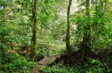 Park Narodowy Niah Borneo (27)
