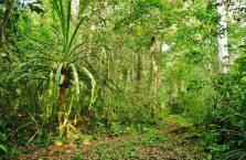 Park Narodowy Niah Borneo (28)