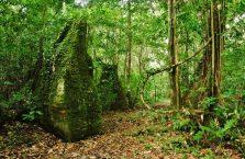 Park Narodowy Niah Borneo (29)