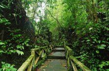 Park Narodowy Niah Borneo (3)