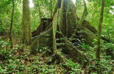 Park Narodowy Niah Borneo (30)