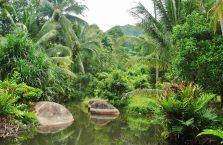 Pulau Tioman (11)