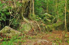Pulau Tioman (39)