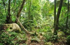 Pulau Tioman (47)