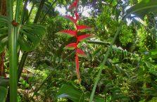 Rainforest Discovery Centre (3)