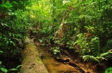 Taman Negara Malaysia (17)