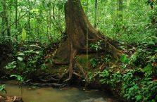 Taman Negara Malaysia (21)
