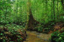 Taman Negara Malaysia (22)