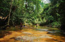 Taman Negara Malaysia (33)