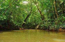 Taman Negara Malaysia (34)