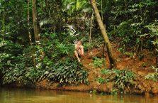 Taman Negara Malaysia (35)