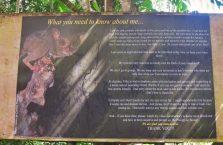 Tarsiery Bohol (1)