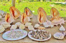 Wierzchołek Borneo (5)
