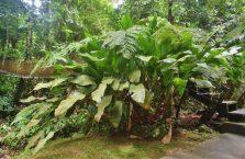 Wioska kulturowa Mari-Mari Borneo (14)
