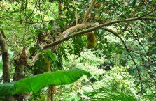 Wodospad Casaroro Negros (3)