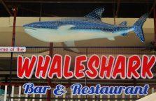 Oslob rekiny wielorybie (6)
